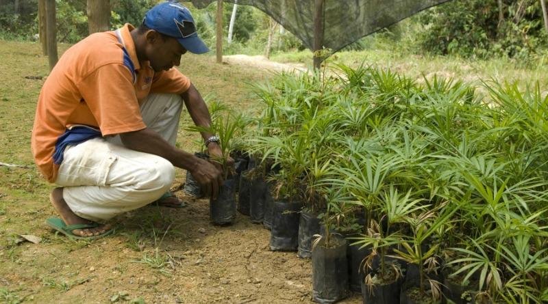quilombola-plantio-mudas-nhunguara
