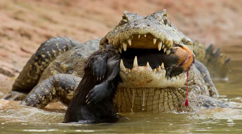fotografia vencedora na categoria fauna do concurso afnatura
