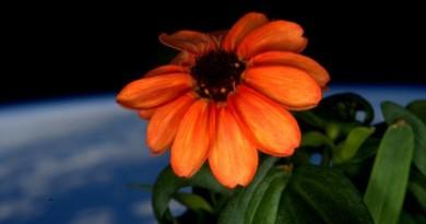 flor cultivanda no espaço