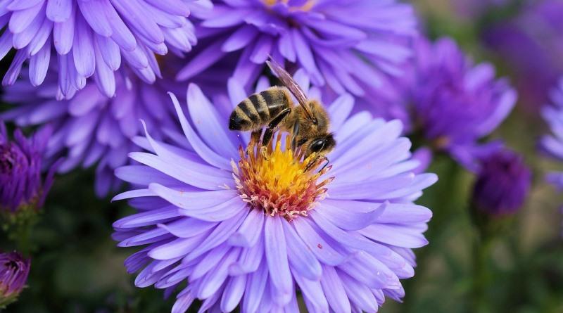 governo-americano-abelhas-pesticida-nickrivers-800
