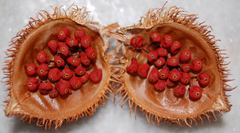 sementes de urucum