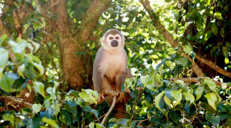 caca-antas-macacos-amazonia-aquecimento-global-800
