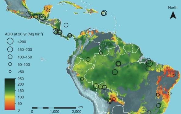 mapa-florestas-regeneradas-são-esponjas-de-carbono