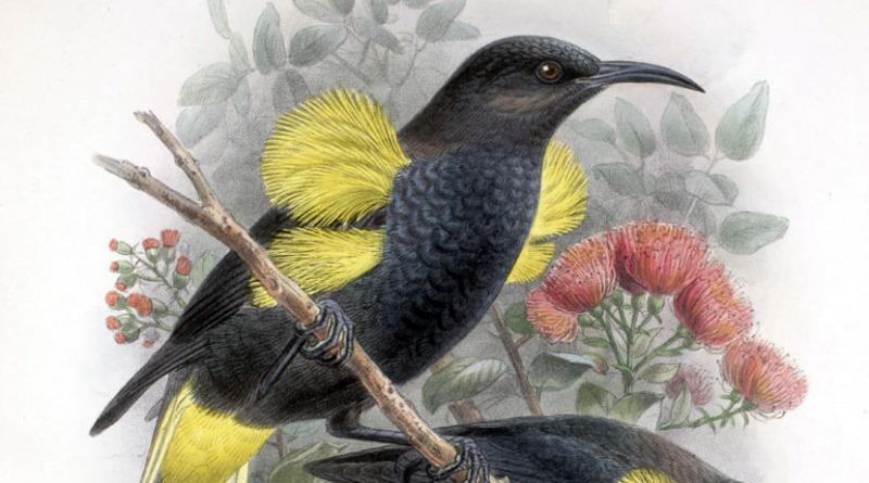 musica-inspirada-passaro-extinto-oscar-800