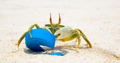 siri com plástico na areia