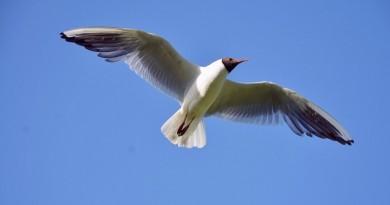 ave voando