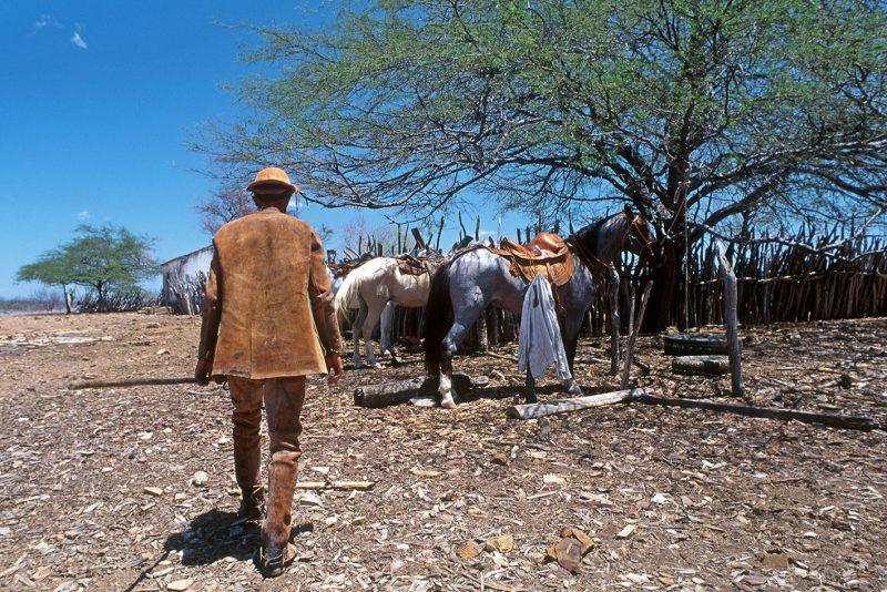 Vaqueiro, Caatinga proxima a Curaça, BA