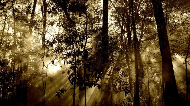dia-da-terra-acordo-climatico-greyerbabay-pixabay-800