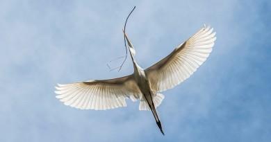 voo da garça
