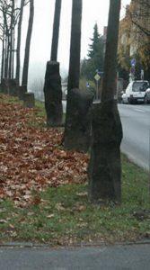 7 mil carvalhos Joseph Beuys#