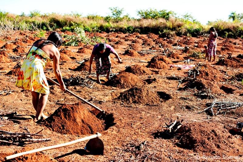 brincando-nos-campos-renato-soares-indias-yawalapiti-roca-mandioca