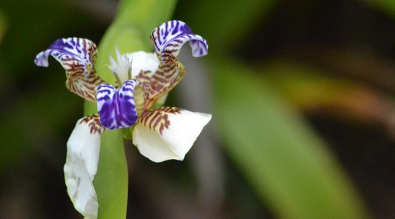 concurso fotográfico promove biodiversidade brasileira