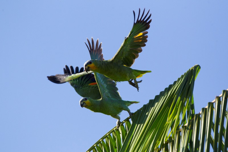 mata-atlantica-papagaios-joao-marcos-rosa
