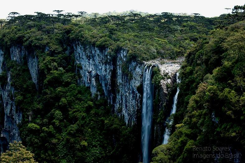 mata-atlantica-parque-nacional-de-aparados-da-serra-renato-soares