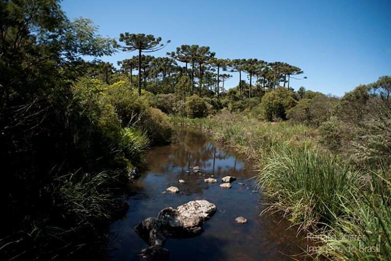 mata-atlantica-parque-nacional-de-aparados-da-serra3-renato-soares