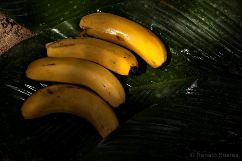mata-atlantica-renato-soares-banana