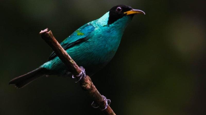 mobile-birding-sai-verde-jose-eduardo-camargo-800