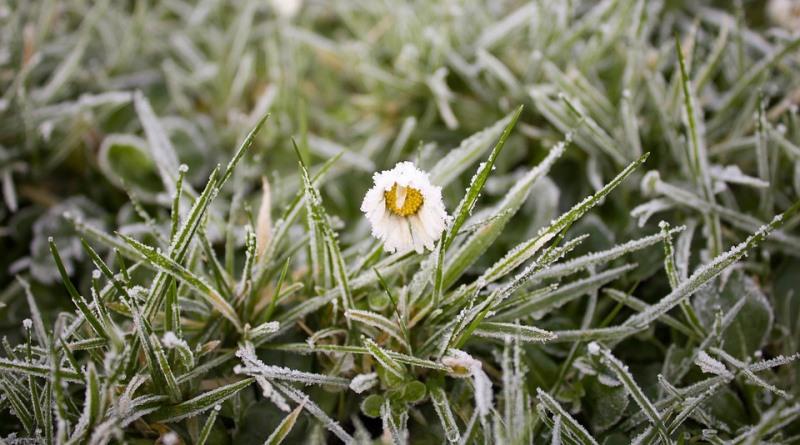 plantas congeladas com o frio do inverno