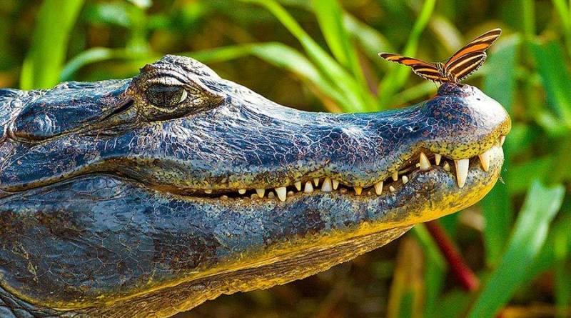 workshop fotográfico com animais no pantanal