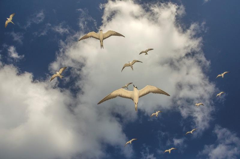 asas-da-conservacao-abre