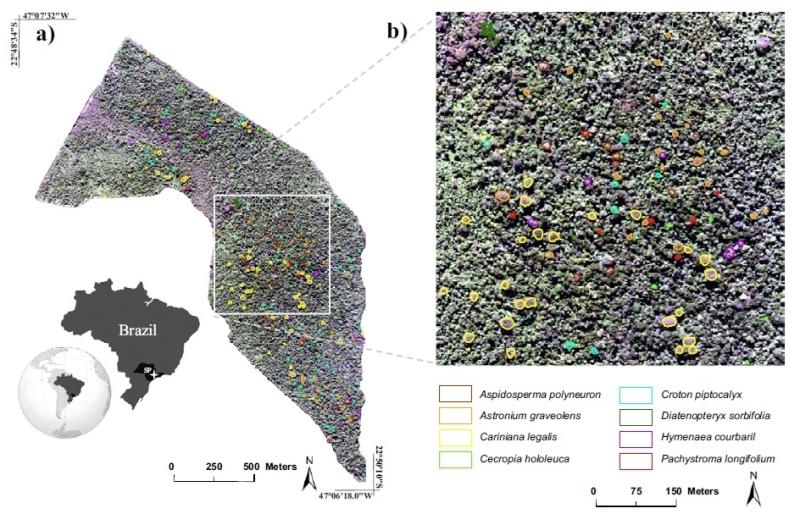 Pesquisa permitiu a identificação de oito espécies em reserva florestal na região de Campinas. No gráfico as copas das árvores são diferenciadas por cores, uma para cada espécie monitorada