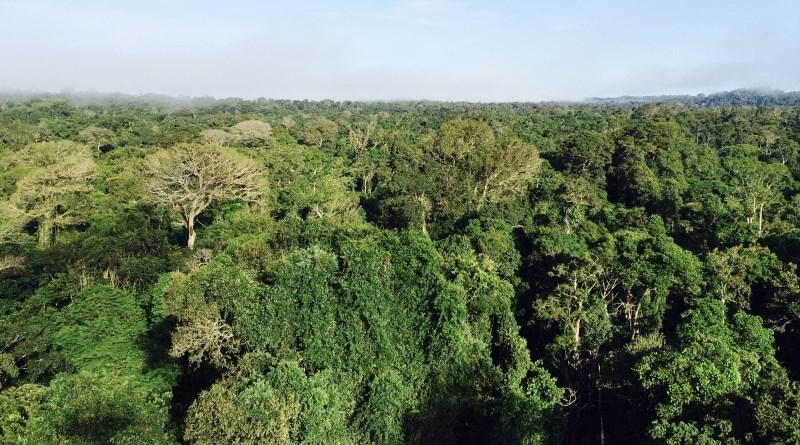 Degradação cria 'floresta zumbi' na Amazônia