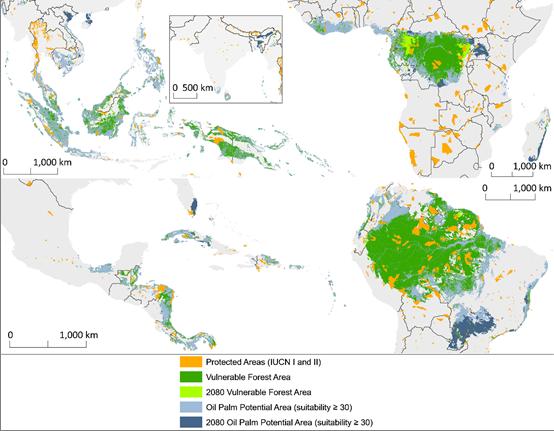 oleo-de-palma-ameacam-florestas-tropicais-de-20-paises-mapa