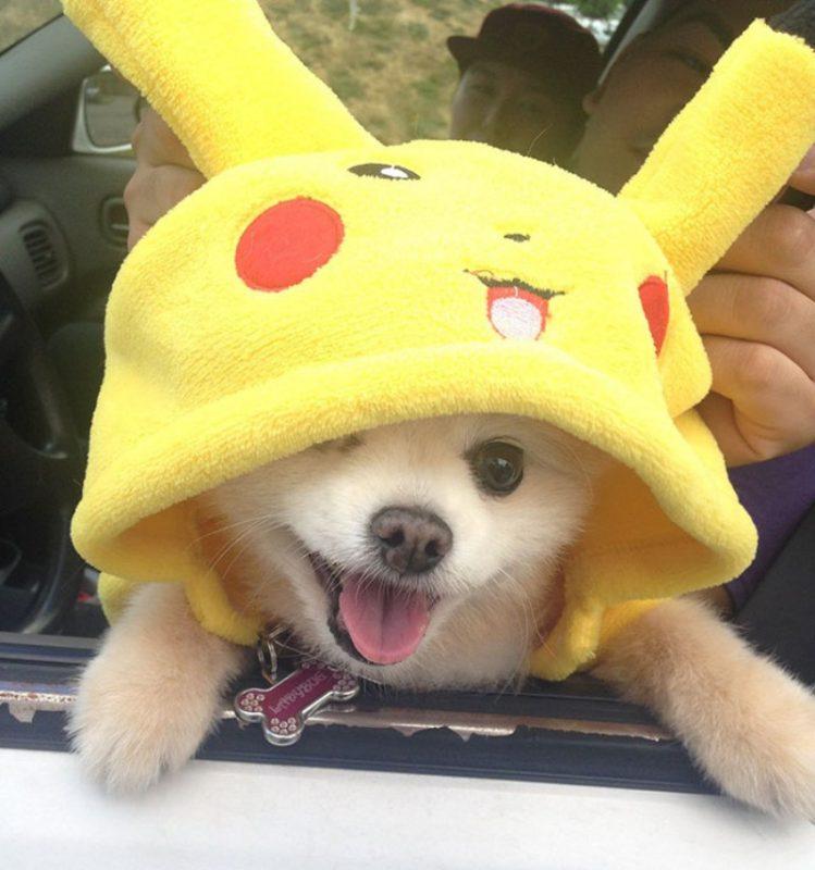 pokemon-go-jogador-cachorro2