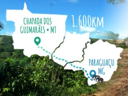 a-jornada-de-maia-e-guida-mapa-xx