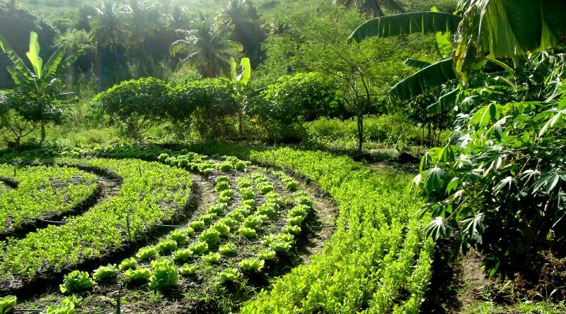agrofloresta-curso-associacao-agricultura-organica