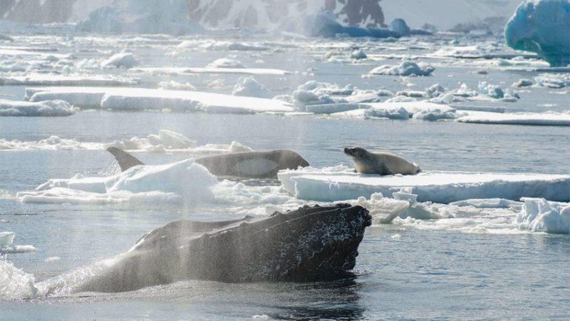baleia-jubarte-protege-especies-800