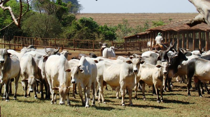 produção de carne feita em área de desmatamento