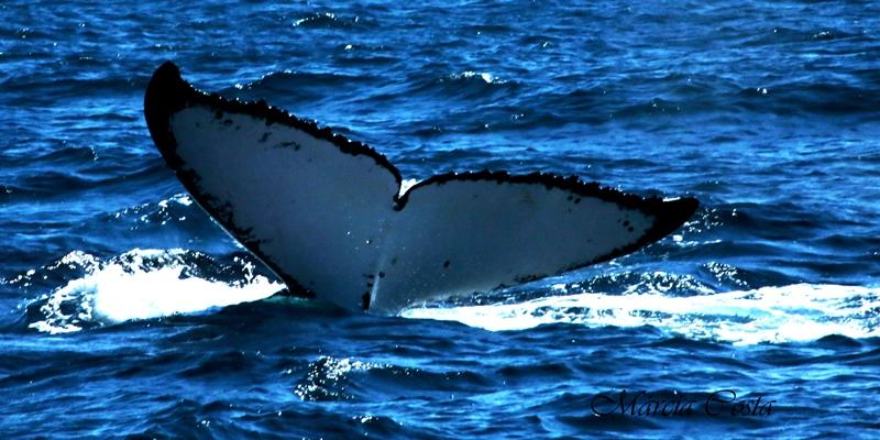 meu-encontro-com-as-baleias-jubartes-4