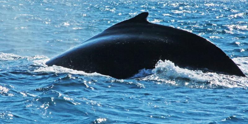 meu-encontro-com-as-baleias-jubartes-5.JPG