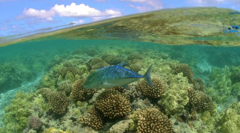 obama cria reserva marinha de Papahānaumokuākea no Havaí
