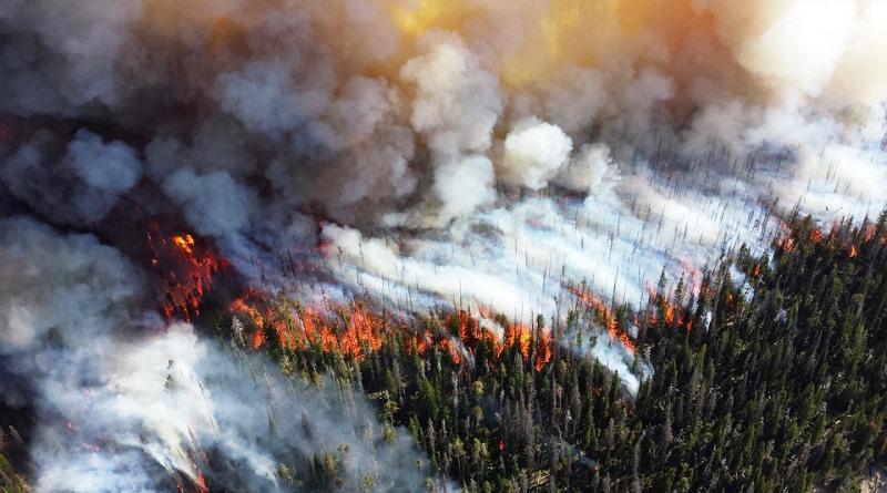 Humanidade destruiu 10% das áreas selvagens do planeta nos últimos 25 anos