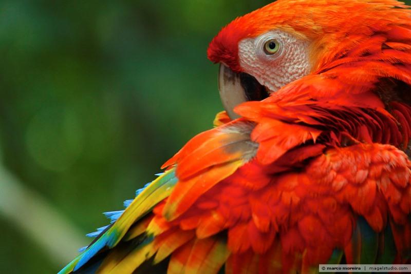 reconexao-amazonia-foto-marco-moreira
