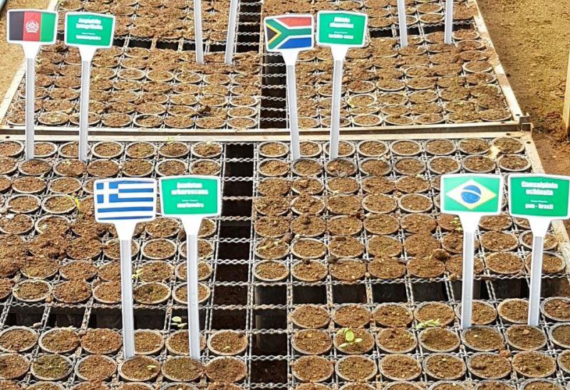 sementes-atletas-jogos-olimpicos-comecam-germinar-800