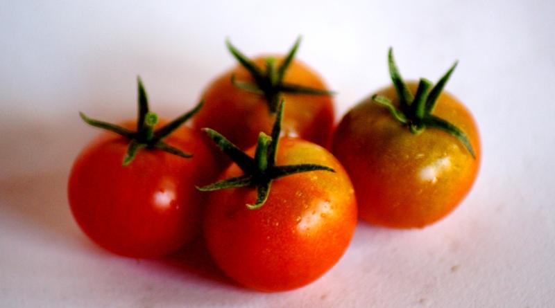 trichoderma_tomatinho2