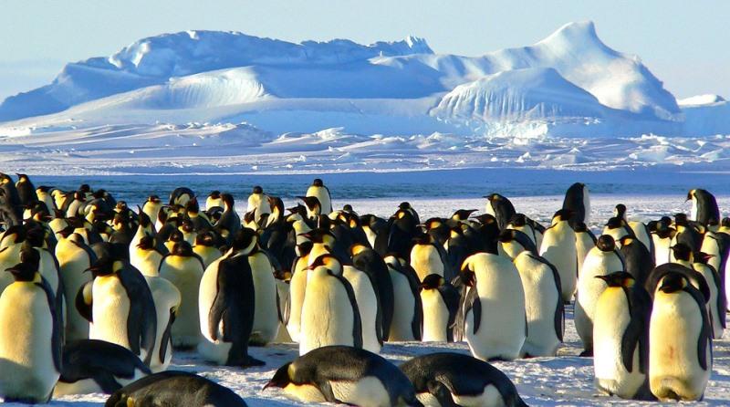 Acordo internacional cria na Antártica a maior reserva de proteção marinha do mundo
