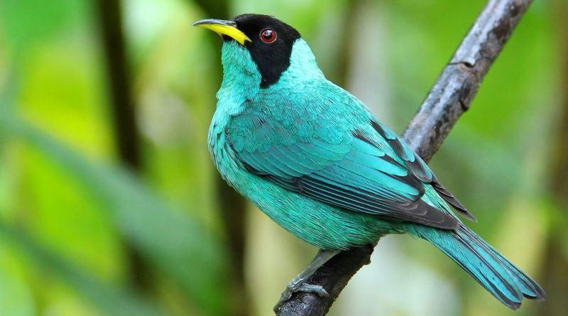 big day brasil de observação de aves
