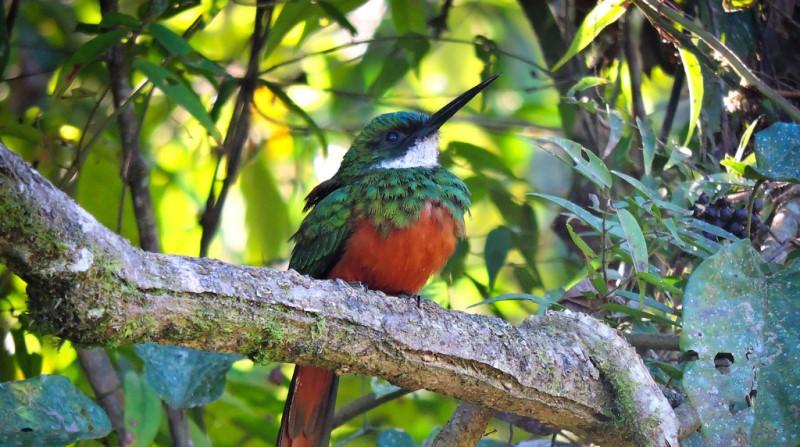 big-day-brasil-observacao-aves-conexao-planeta