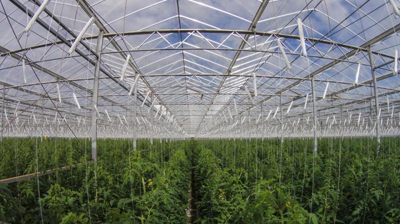 fazenda-deserto-produz-alimentos-luz-sol-agua-mar-estufa-conexao-planeta