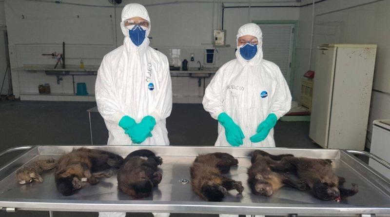 macacos-alerta-rio-de-janeiro-divulgacao