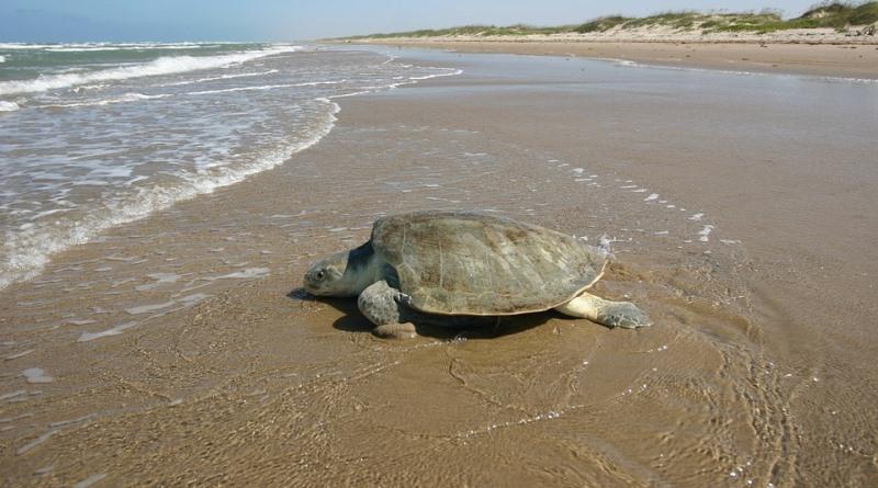 obama-cria-primeira-reserva-marinha-oceano-atlantico-tartaruga-conexao-planeta
