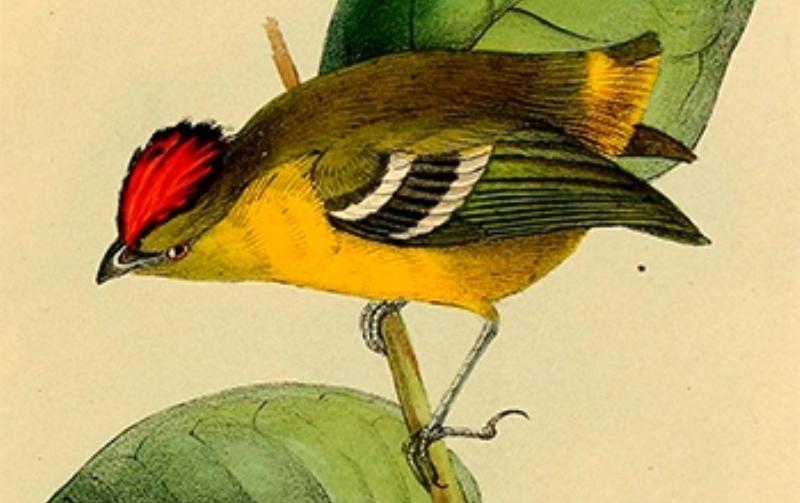 pesquisadores-procuram-ave-desaparecida-fapesp-abre
