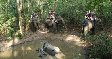 TripAdvisor para de vender pacotes turísticos envolvendo contato com animais