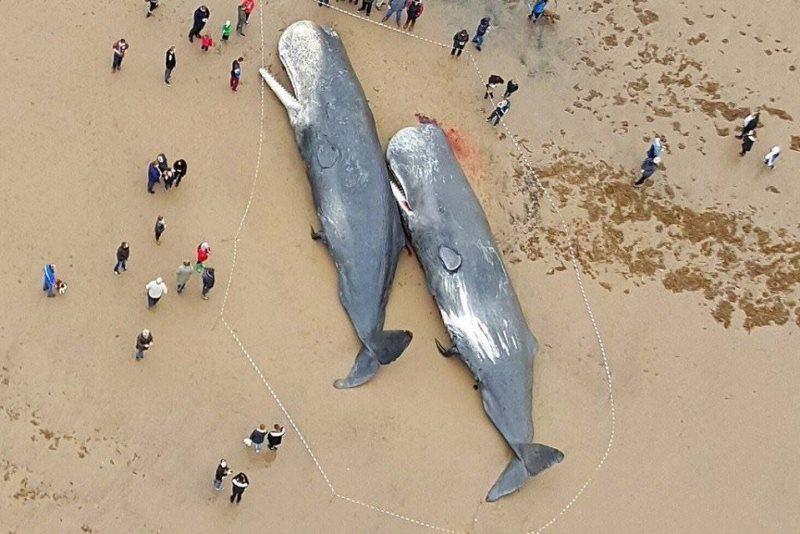 adidas-parley-baleias-conexao-planeta