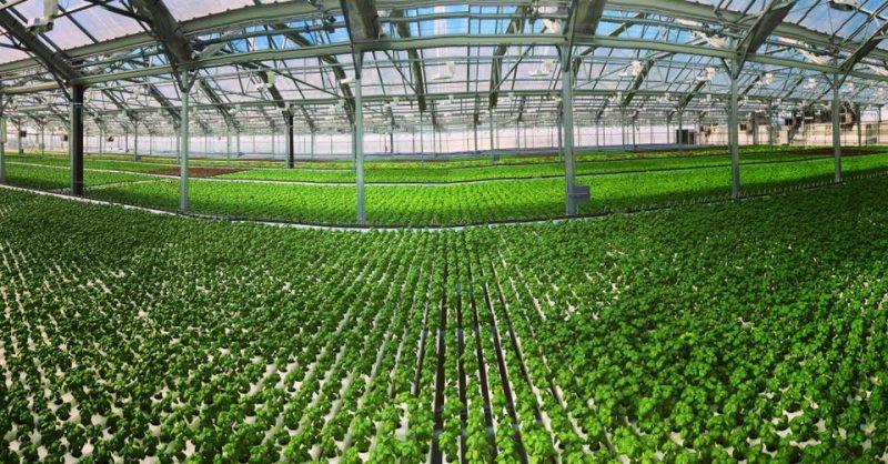 fazendas-urbanas-espalham-telhados-nova-york-chicago-8-conexao-planeta