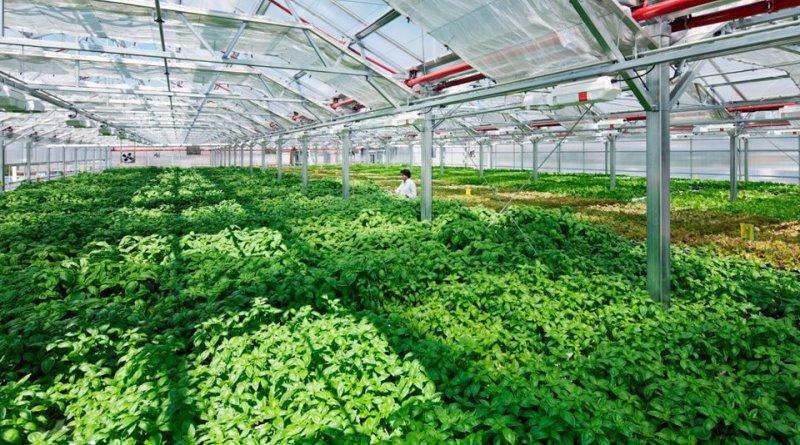 fazendas-urbanas-espalham-telhados-nova-york-chicago-conexao-planeta